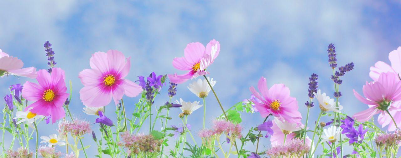 8 consejos para la prevención de plagas en primavera